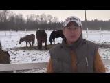 О лошади на приусадебном участке