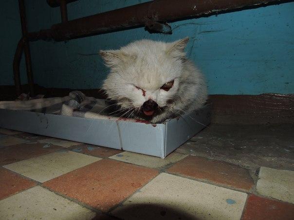 Подростки издевались над котом