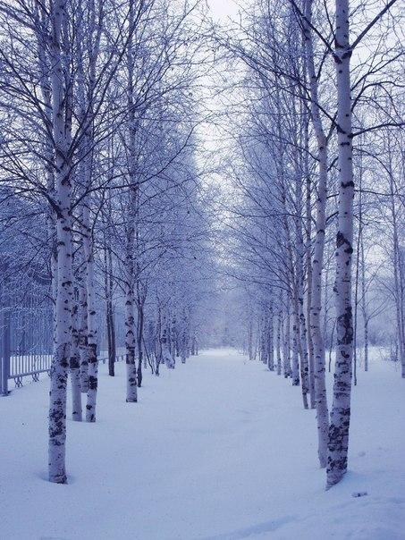 #Однажды в #студёную зимнюю пору... 💙💜💛