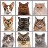 CATcatalog. Породистые котята.
