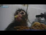 Прикол про маленькую обезьяну!