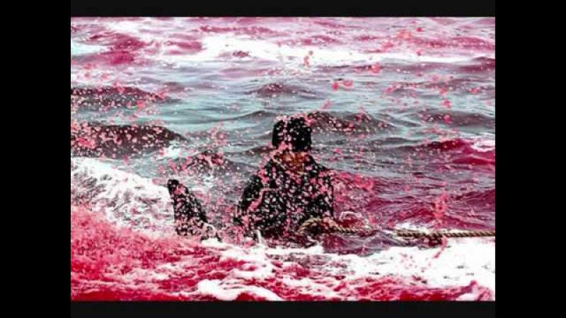 Dolphin Slaughter in Denmark