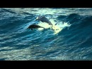 The Ocean Goldripp Remix ~ Chill Out Ibiza Vol. 3 ~ Dolphins Humpbacks Love of the Ocean HD