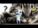 Zoobe Зайка Что вы знаете про кошку Стих
