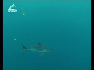 Опасность в дикой природе: Акула-мако. 1-я серия 2010