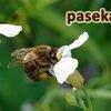 Пчеловодство на Севере. Северный мёд.