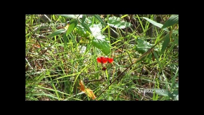 Долина реки Боровлянки лето Курганская область