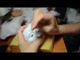 мастер класс по изготовлению скульптурной -текстильной куклы ч.3