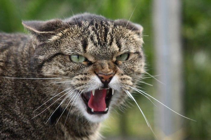 В Ростовской области кот, больной бешенством, напал на пятерых человек