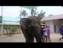 Гам ган стайл от слона