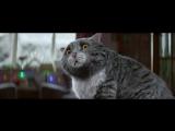 Кот и Рождество