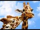 Интересные факты животного мира.