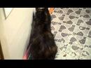 Кошка - проказница сама открыла дверь в другую комнату