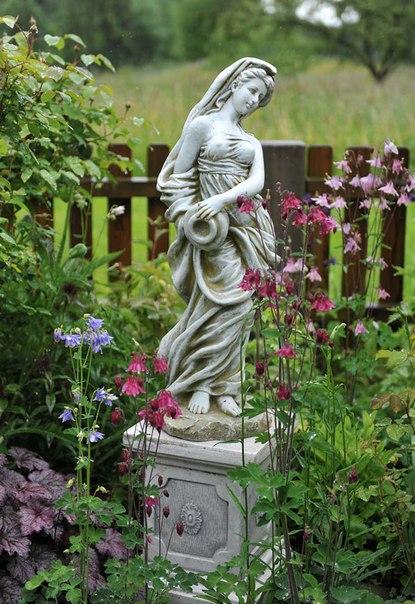 Как сажать и вырастить аквилегию из семян-аквилегия,гейхера,розы