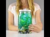 Искусственный аквариум ?