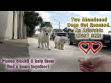 A Dog Rescue Video That Will Make You Laugh, Smile &amp Believe In True Love!