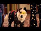 Собака точка ком Сезон 2 Серия 13