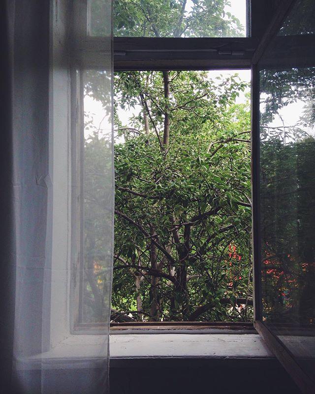 Анастасия Домбровская: Кто влюбился в вид из окна кабинета - тот все, кто приходит ко мне в гости🤓🌳
