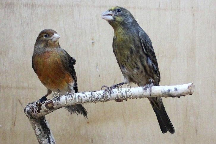 Фотографии моих птиц  - Страница 3 JCn2YjjrI8w