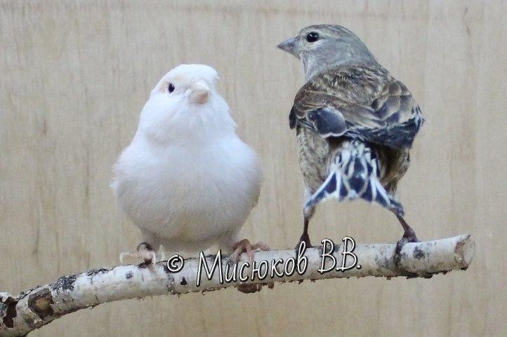 Фотографии моих птиц  - Страница 3 BkCz7EGtEao
