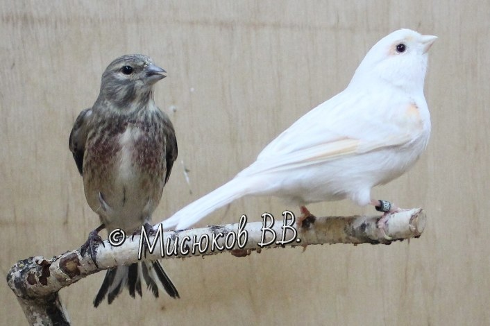 Фотографии моих птиц  - Страница 3 V20oak2RCDY