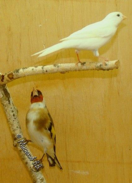 Фотографии моих птиц  - Страница 3 NLaTHkxSoxs