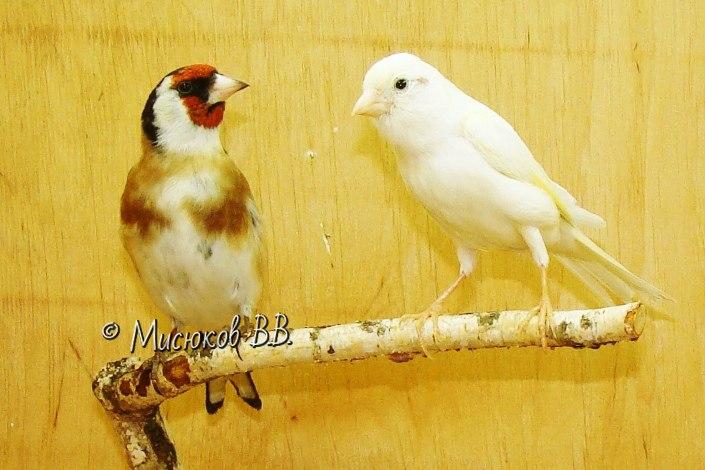 Фотографии моих птиц  - Страница 3 W3hgdO6KlFU