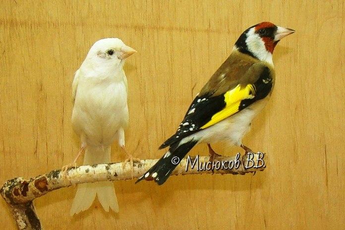 Фотографии моих птиц  - Страница 3 RTpvaAS3Uqc