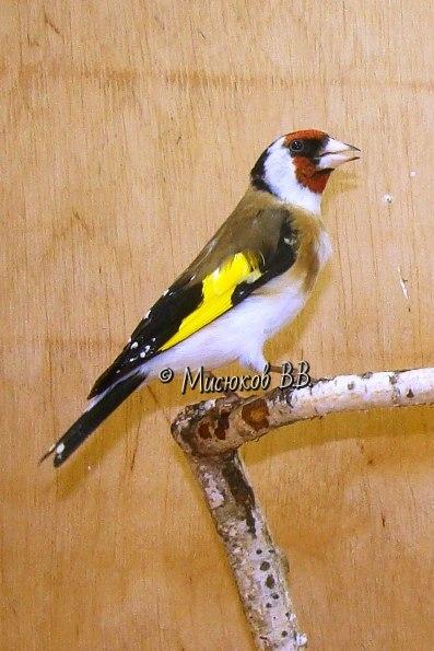 Фотографии моих птиц  - Страница 3 9uyaJ5fcZCA