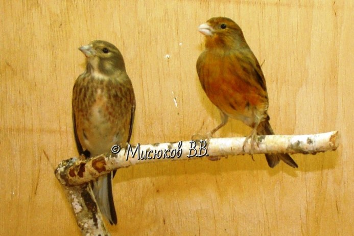 Фотографии моих птиц  - Страница 3 MW2lv82ugo8