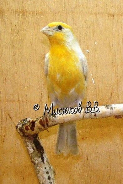 Фотографии моих птиц  - Страница 3 TjnNnroFf4c