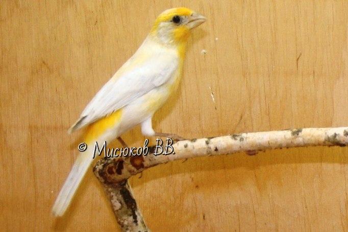 Фотографии моих птиц  - Страница 3 G-ohhwHAnws