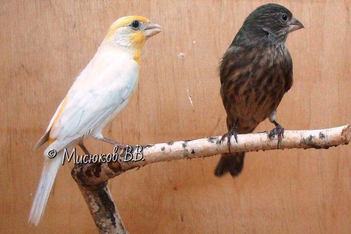 Фотографии моих птиц  - Страница 3 GuPHbaQEIAM