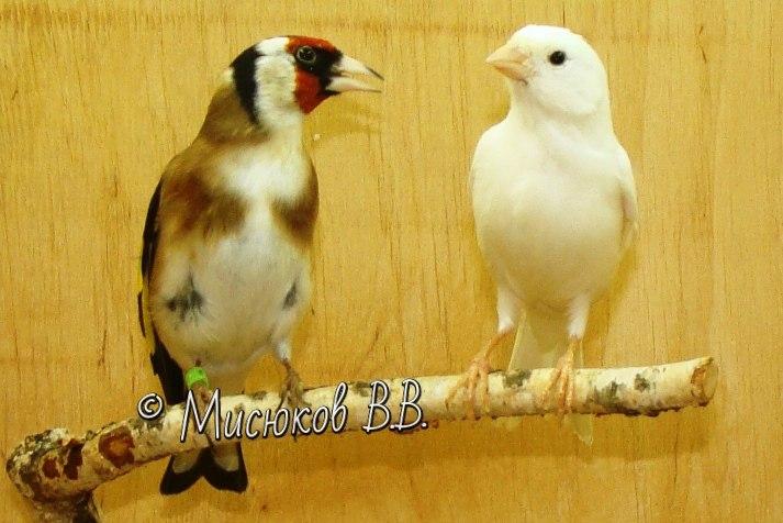 Фотографии моих птиц  - Страница 3 KY7L6XVj_5Q
