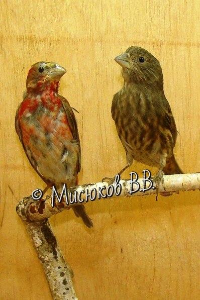 Фотографии моих птиц  - Страница 3 OJlYAaABG6k