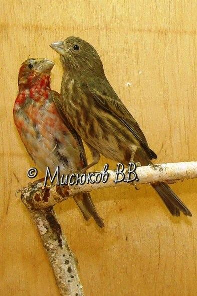 Фотографии моих птиц  - Страница 3 GN6nWtqxXuI
