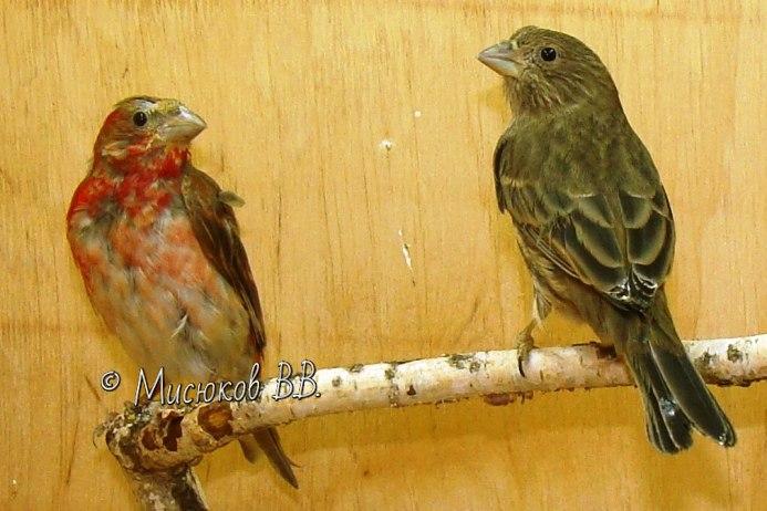 Фотографии моих птиц  - Страница 3 8Wj9CQUhNMQ