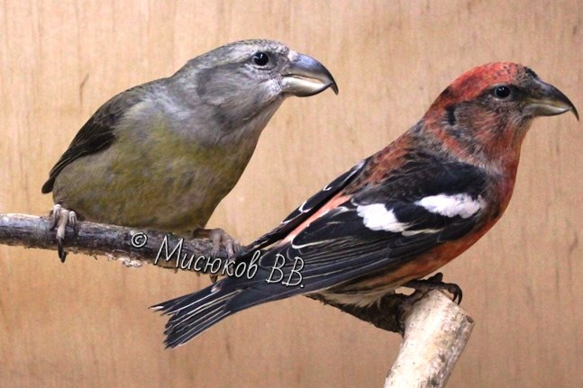 Фотографии моих птиц  - Страница 3 QEh9hNqx1eY
