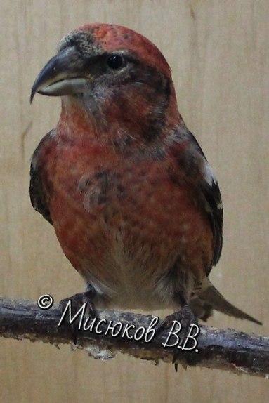 Фотографии моих птиц  - Страница 3 OHcvldCD0Yo