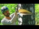 Как спилить дерево бензопилой. Как спилить дерево в нужном направлении