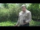 Технология выращивания винограда Николай Сергеев 2