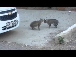 Two cats near dustman's car (Два кота возле машины мусорщика)