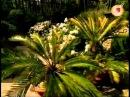 Зачарованные сады ч 6