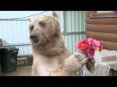Один день с Один день с медведем Степаном