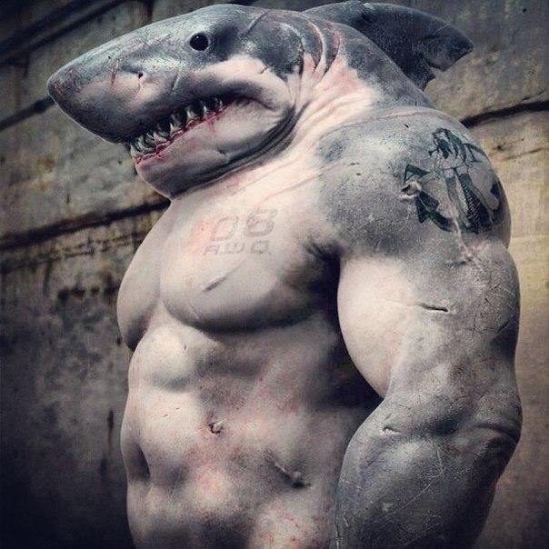 крутые картинки акул качков дней