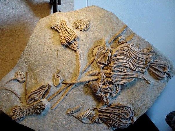 """""""Натуральный барельеф"""" - возраст 280 млн лет."""
