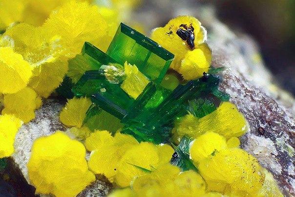 Торбернит (зеленый) и фосфуранилит (желтый).