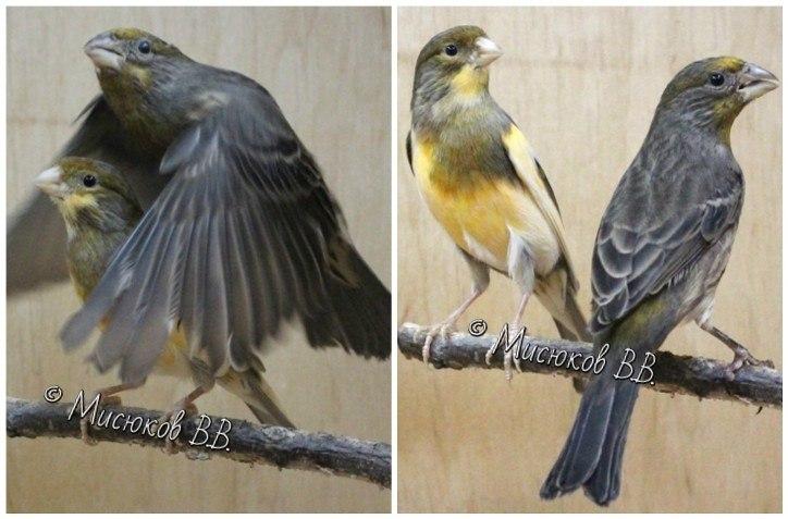 Фотографии моих птиц  - Страница 3 MSFaOTbQbMQ