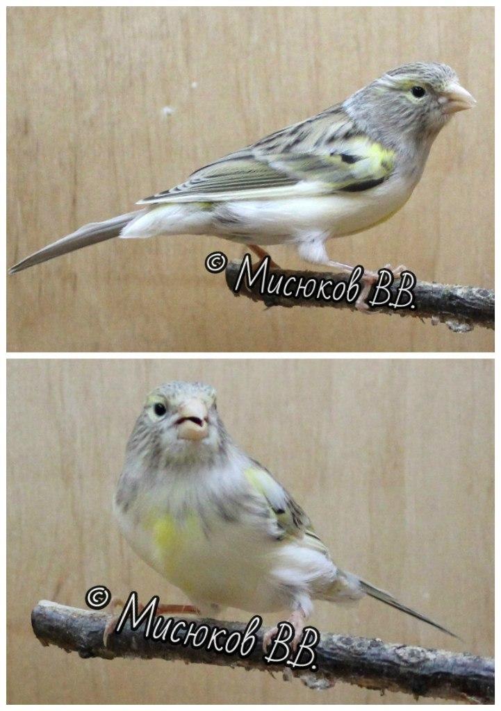 Фотографии моих птиц  - Страница 3 0nJfWt1fDiA