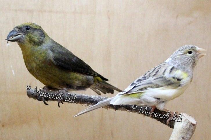 Фотографии моих птиц  - Страница 3 4RaPAPy1zmY